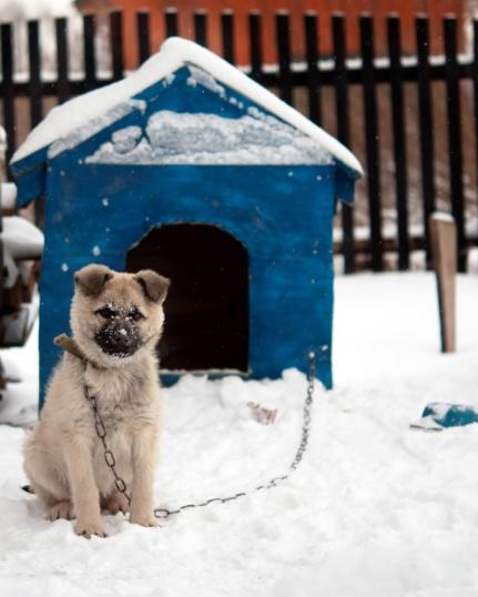 Обогреватель для собачьей будки