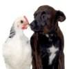 Инфракрасные обогреватели для птиц и животных